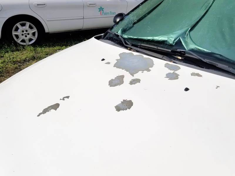 White 2007 Ford Taurus paint missing from hood.